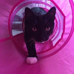 Cat in tunnel