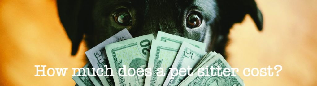 How Much Does A Pet Sitter Cost
