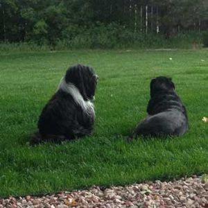 two dogs on grass